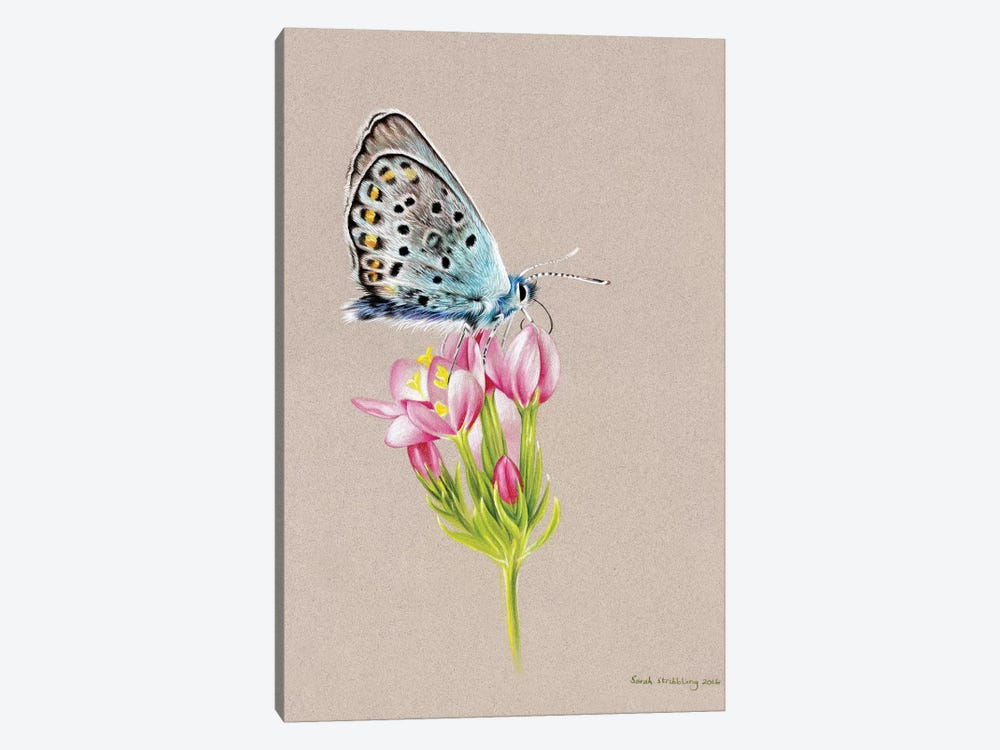Butterfly Toned by Sarah Stribbling 1-piece Canvas Print