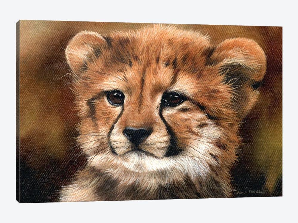 Cheetah Cub I by Sarah Stribbling 1-piece Canvas Wall Art