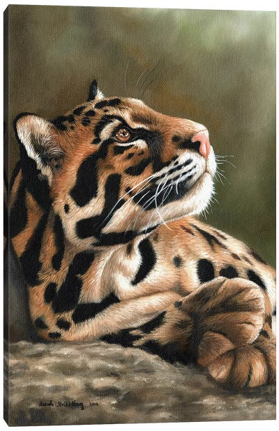 Clouded Leopard I Canvas Art Print