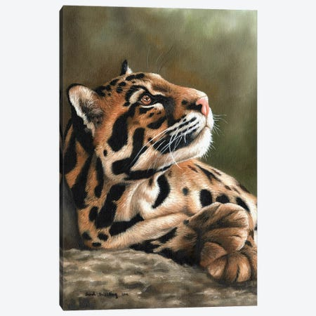 Clouded Leopard I 3-Piece Canvas #SAS28} by Sarah Stribbling Canvas Print