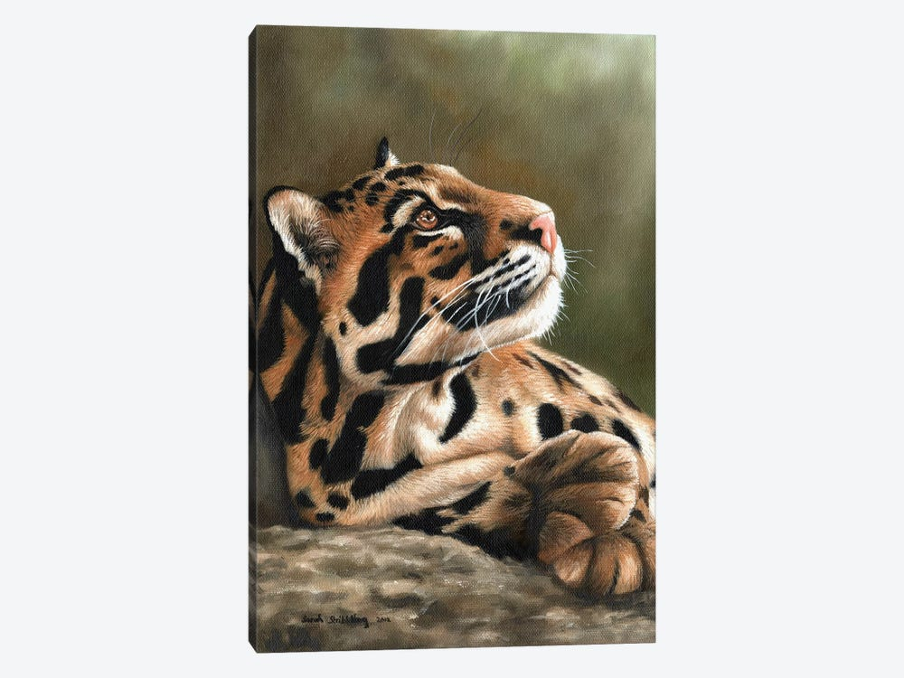 Clouded Leopard I by Sarah Stribbling 1-piece Canvas Print