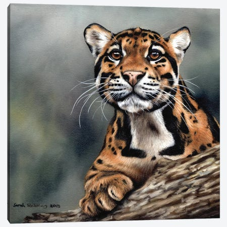 Clouded Leopard II 3-Piece Canvas #SAS29} by Sarah Stribbling Canvas Print
