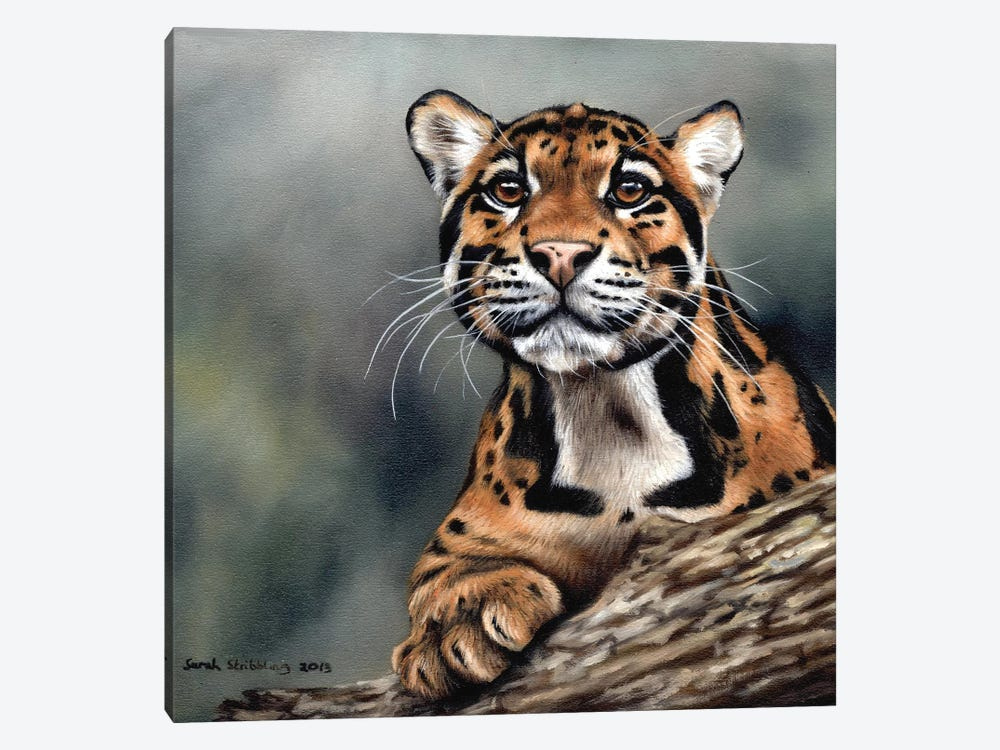 Clouded Leopard II by Sarah Stribbling 1-piece Canvas Artwork