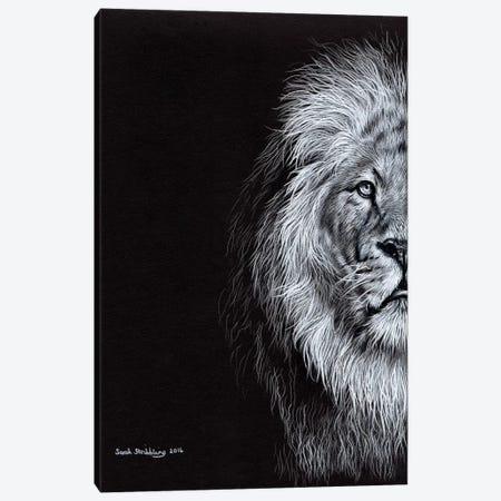 African Lion I Canvas Print #SAS2} by Sarah Stribbling Canvas Art Print