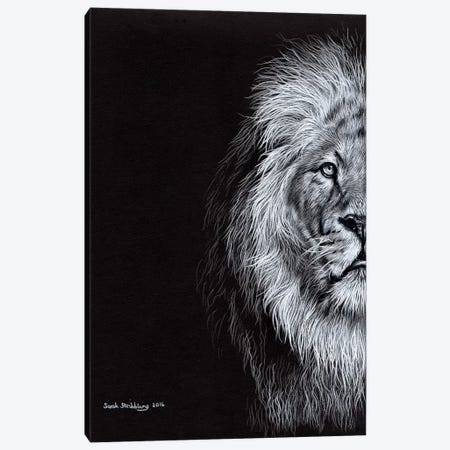 African Lion I Canvas Print #SAS2} by Sarah Stribbling Canvas Art Print