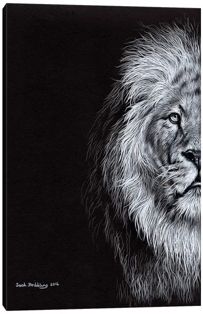 African Lion I Canvas Art Print
