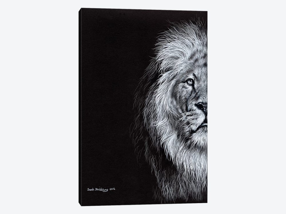 African Lion I by Sarah Stribbling 1-piece Canvas Print