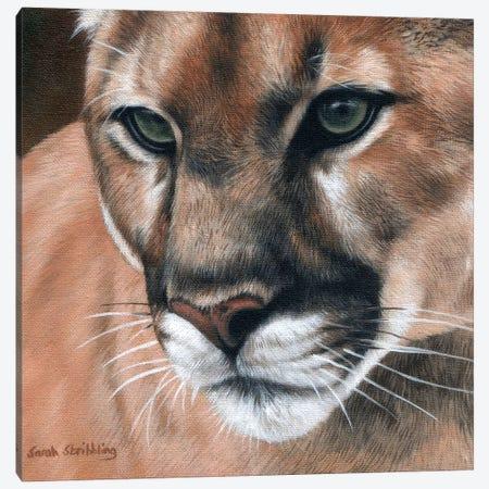 Cougar Canvas Print #SAS30} by Sarah Stribbling Canvas Wall Art