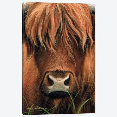 Cow Canvas Print #SAS32} by Sarah Stribbling Canvas Art