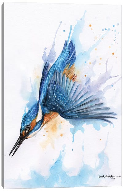 Diving Kingfisher I Canvas Art Print