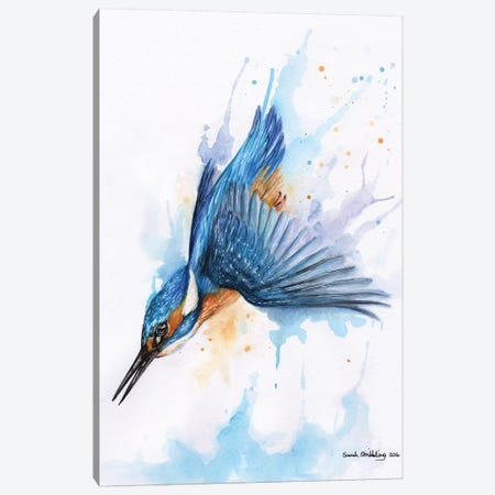 Diving Kingfisher I Canvas Print #SAS33} by Sarah Stribbling Canvas Art