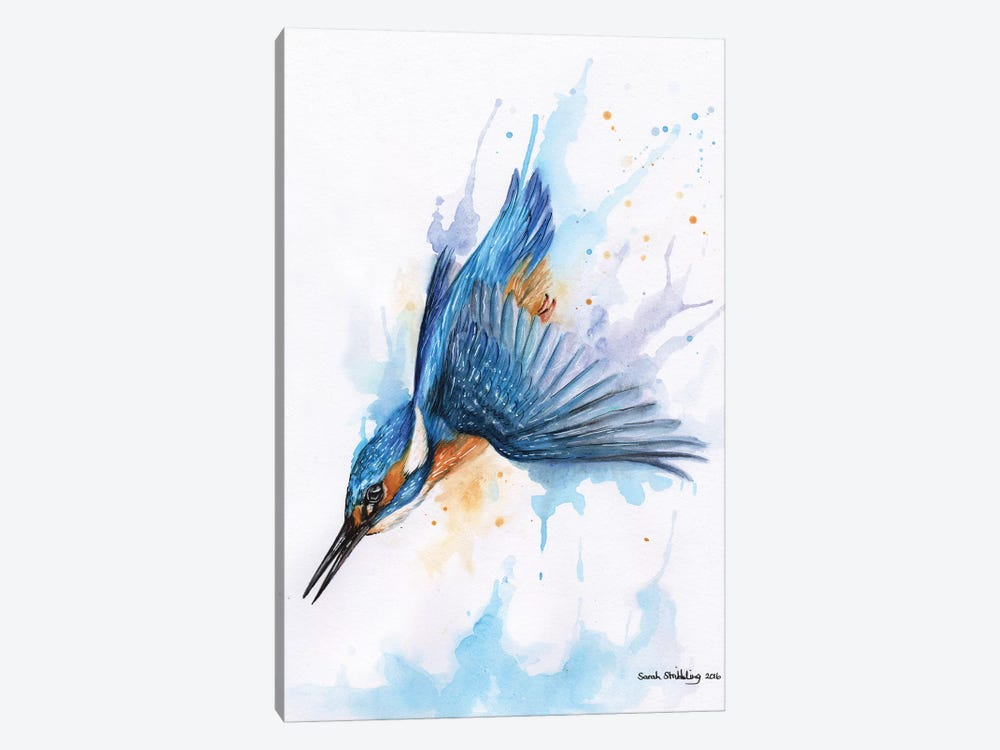 Diving Kingfisher I by Sarah Stribbling 1-piece Canvas Print