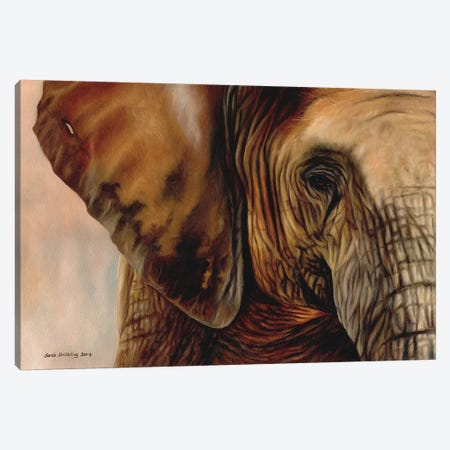 Elephant Canvas Print #SAS37} by Sarah Stribbling Canvas Art Print