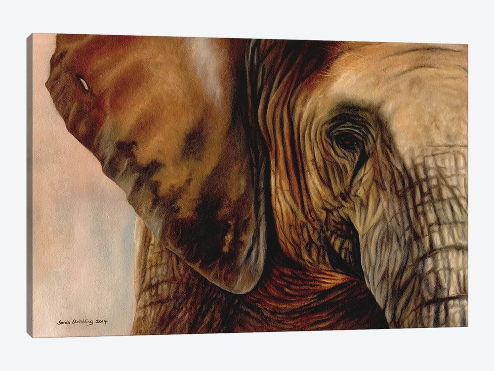 Elephant by Sarah Stribbling 1-piece Canvas Print