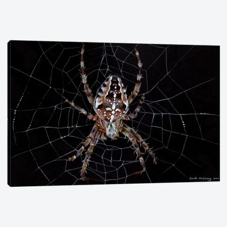 Garden Spider Canvas Print #SAS40} by Sarah Stribbling Canvas Print