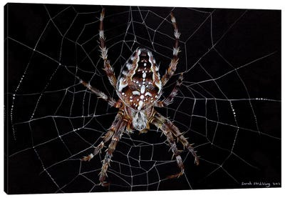 Garden Spider Canvas Art Print