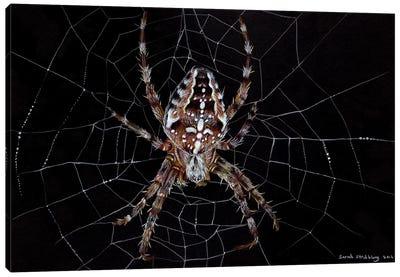 Garden Spider Canvas Art Print