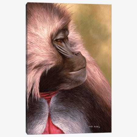 Gelada Canvas Print #SAS41} by Sarah Stribbling Canvas Print