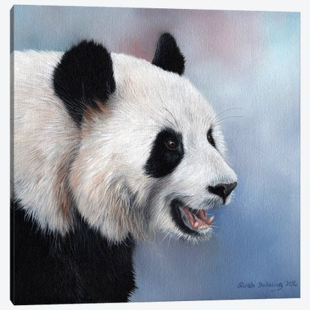 Giant Panda Canvas Print #SAS42} by Sarah Stribbling Canvas Print