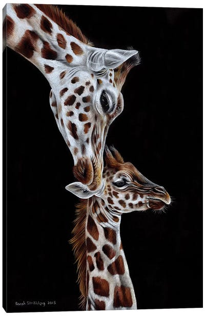 Giraffes I Canvas Art Print