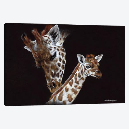 Giraffes II  Canvas Print #SAS44} by Sarah Stribbling Canvas Artwork