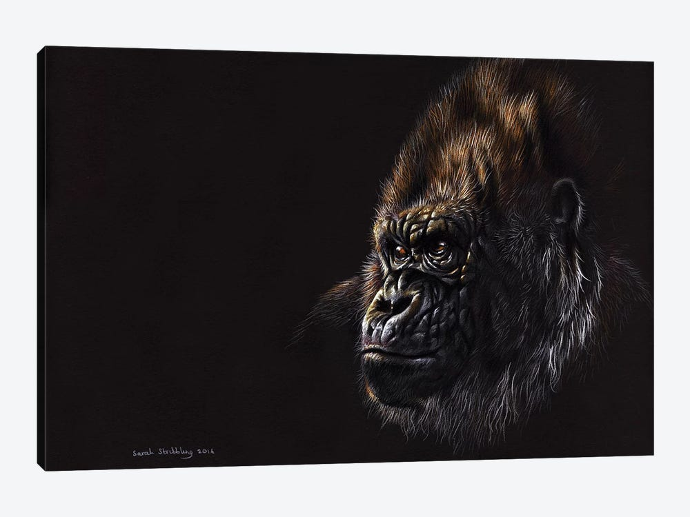 Gorilla Pastel by Sarah Stribbling 1-piece Canvas Wall Art