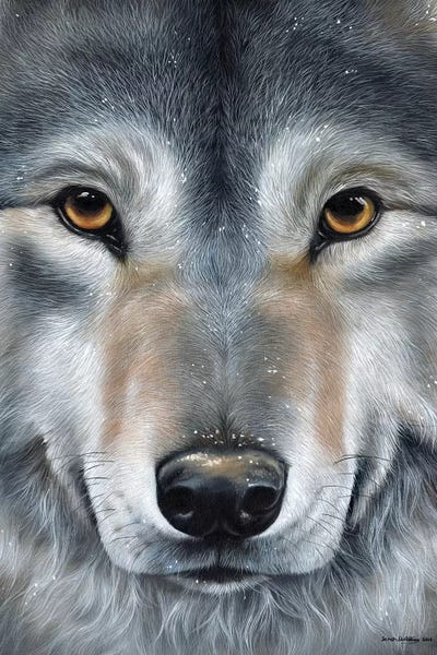 Grey Wolf Face Canvas Wall Art By Sarah Stribbling Icanvas