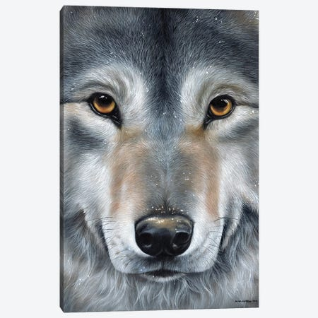 Grey Wolf Face Canvas Print #SAS47} by Sarah Stribbling Canvas Wall Art