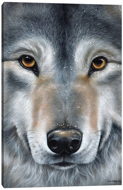 Grey Wolf Face by Sarah Stribbling Canvas Art Print