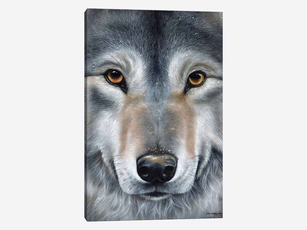 Grey Wolf Face by Sarah Stribbling 1-piece Canvas Wall Art