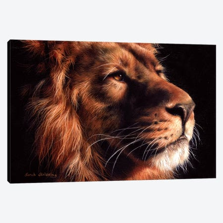 African Lion II Canvas Print #SAS4} by Sarah Stribbling Canvas Art