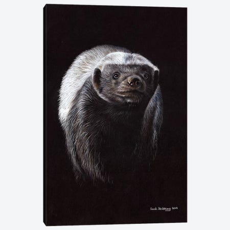 Honey Badger Canvas Print #SAS51} by Sarah Stribbling Canvas Artwork