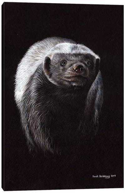 Honey Badger Canvas Art Print