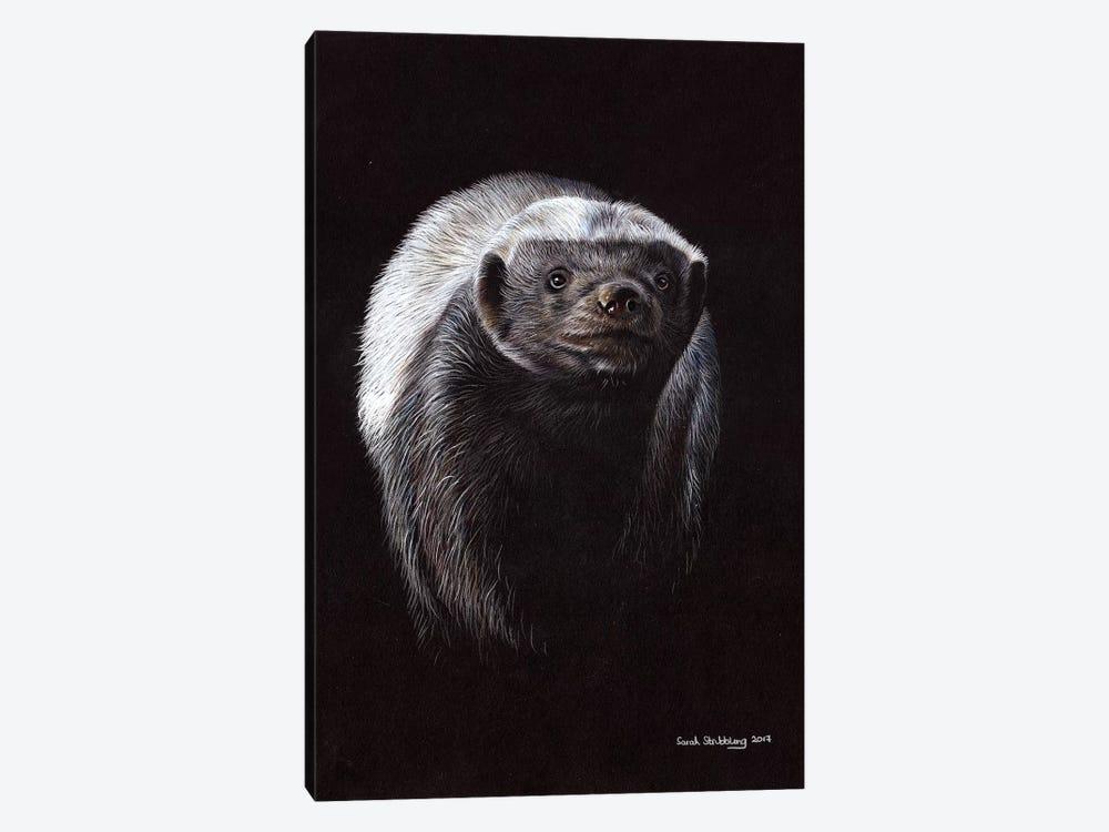 Honey Badger by Sarah Stribbling 1-piece Canvas Art Print