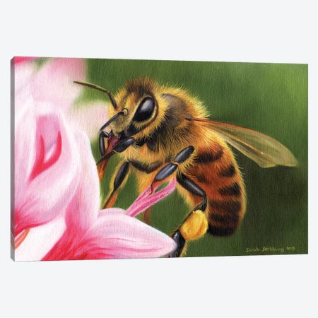Honey Bee Canvas Print #SAS52} by Sarah Stribbling Canvas Wall Art