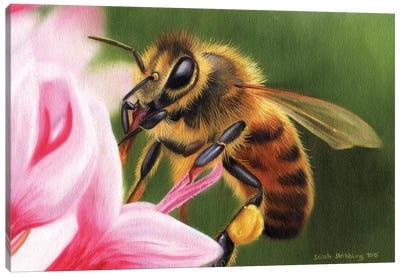 Honey Bee Canvas Art Print