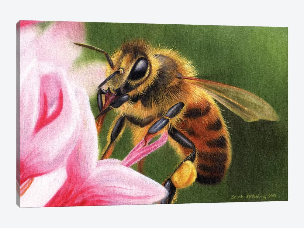 Honey Bee by Sarah Stribbling 1-piece Canvas Artwork