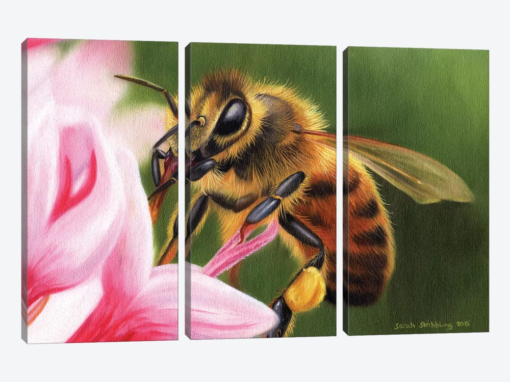 Honey Bee by Sarah Stribbling 3-piece Canvas Wall Art