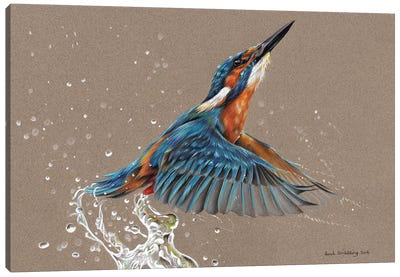 Kingfisher I Canvas Art Print