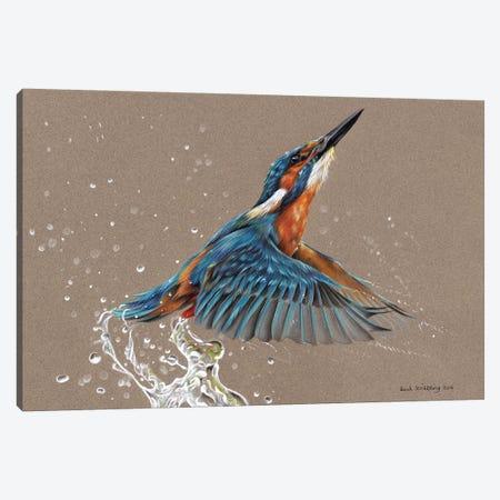 Kingfisher I Canvas Print #SAS54} by Sarah Stribbling Canvas Print