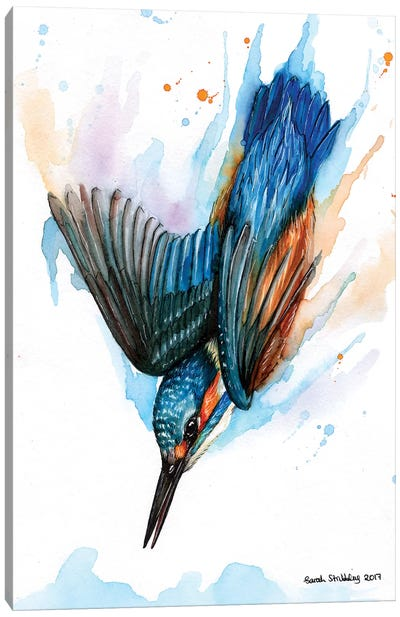 Diving Kingfisher II Canvas Art Print
