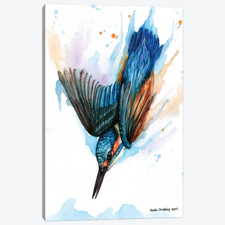 Diving Kingfisher II Canvas Print #SAS55} by Sarah Stribbling Art Print
