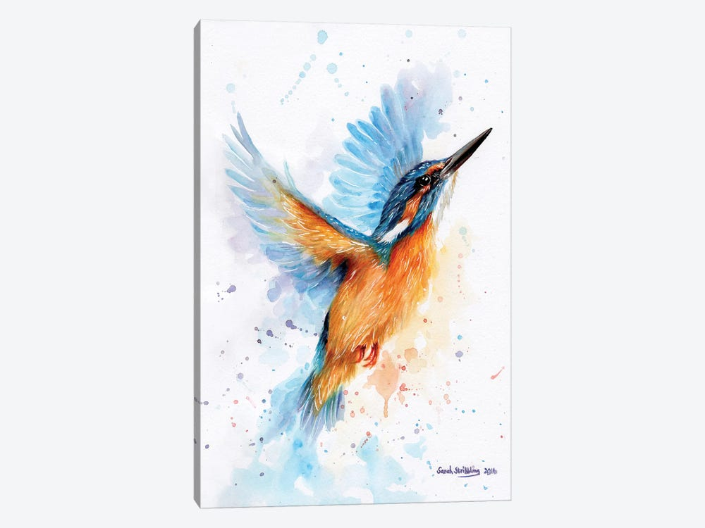 Kingfisher Watercolour by Sarah Stribbling 1-piece Canvas Art Print