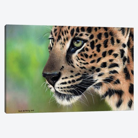 Leopard Canvas Print #SAS58} by Sarah Stribbling Canvas Artwork