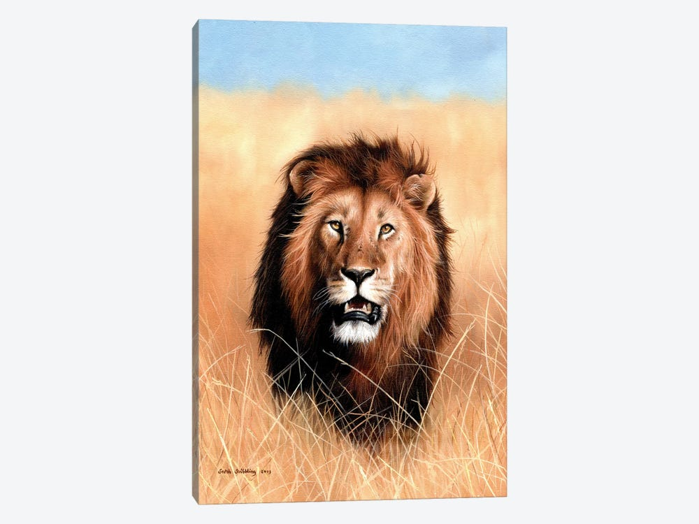 African Lion III by Sarah Stribbling 1-piece Canvas Artwork