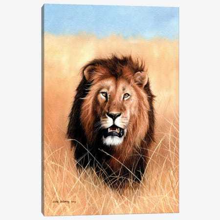 African Lion III Canvas Print #SAS5} by Sarah Stribbling Canvas Art