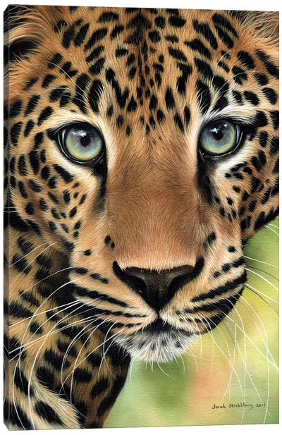 Leopard Close-Up Canvas Art Print