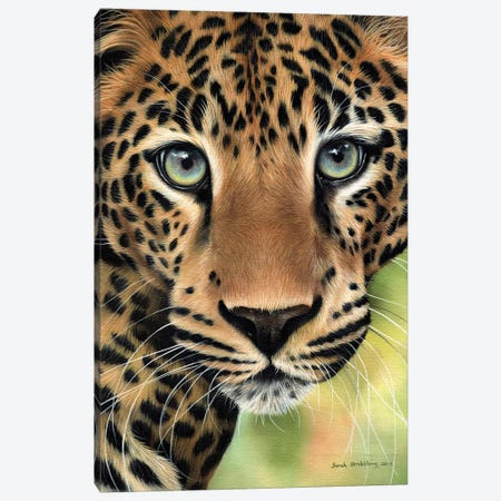 Leopard Close-Up 3-Piece Canvas #SAS61} by Sarah Stribbling Canvas Print