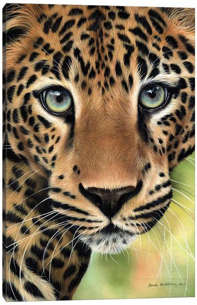 Leopard Close-Up Canvas Art Print