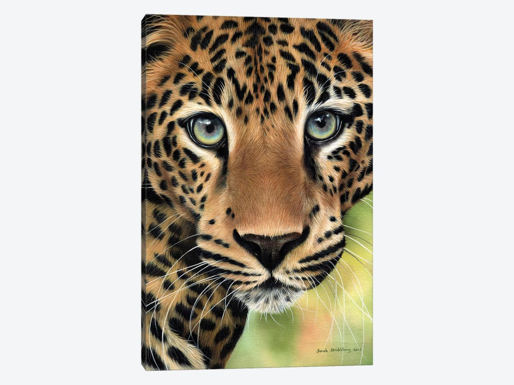 Leopard Close-Up by Sarah Stribbling 1-piece Canvas Art